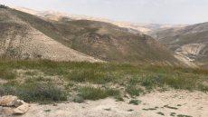 תמונה 4 מתוך חוות דעת על הרב דוד הריסון - רבנים ועורכי טקסים
