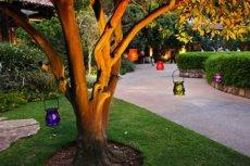 תמונה 4 של ביער - גן אירועים - אולמות וגני אירועים