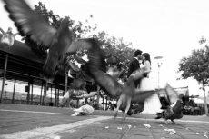 תמונה 7 של סימפל גולן ואלינה - simple - צילום וידאו וסטילס