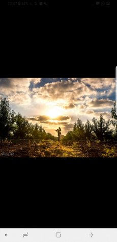 תמונה 3 מתוך חוות דעת על רמי כהן צלם  - צילום וידאו וסטילס