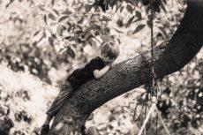 תמונה 5 מתוך חוות דעת על שחר דרורי - צילום וידאו וסטילס