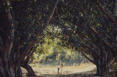 תמונה 3 מתוך חוות דעת על נדב כהן יונתן - צלמי סטילס