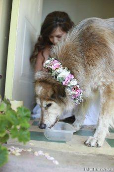 תמונה 5 מתוך חוות דעת על שזור בקסם - עיצוב אירועים ועמדות שזירה - שזירת פרחים