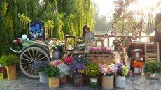 תמונה 6 של פרחי היסמין דוכן שזירה - עיצוב אירועים