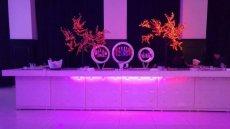 תמונה 4 של לורין הפקות - הפקה וניהול אירועים