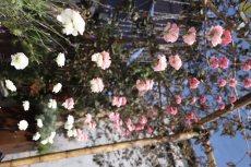 תמונה 4 של לילי - עמדת שזירה ועיצוב חתונות  Lily - Flower Booth - עיצוב אירועים