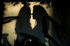 תמונה 3 מתוך חוות דעת על גלית סבג - צילום וידאו וסטילס