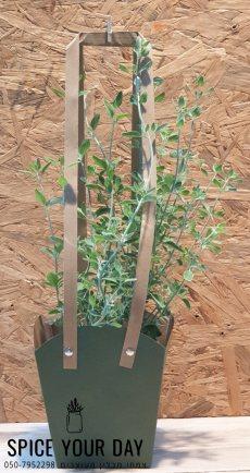 תמונה 5 של SPICE YOUR DAY- עציצי תבלין מעוצבים - עיצוב אירועים